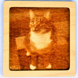Dřevěný gravírovaný obrázek malý-kočka pohled do leva